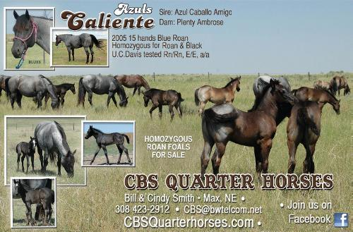 CLICK HERE TO VISIT CBS QUARTER HORSES WEBSITE