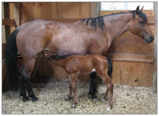 otoe black personals 18 january-february 2012 america's horse kansas' ts ranch continues a half-century of breeding quality quarter horses by frank j buchman.