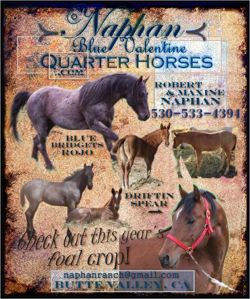 click ad to visit Naphan Blue Valentine Quarter Horses website